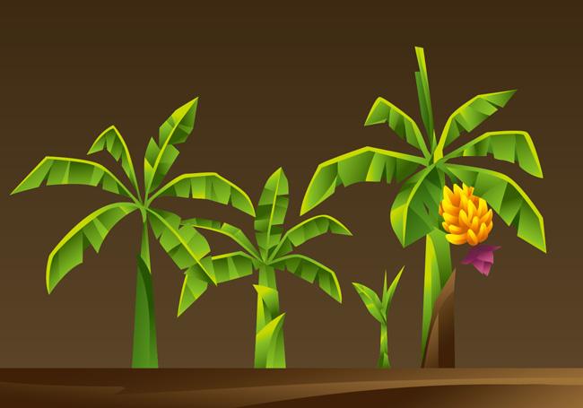 手绘矢量香蕉树造型设计素材