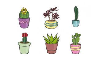 手绘仙人掌植物盆景造型