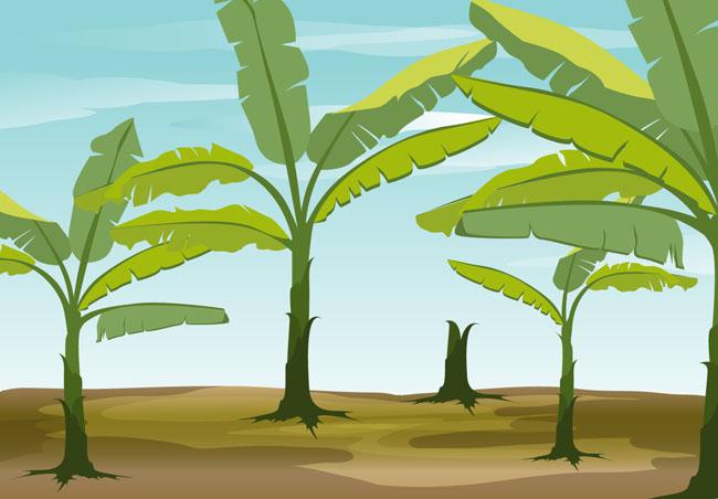 香蕉树林场景设计矢量素材 香蕉树矢量素材  扁平化手绘香蕉树造型