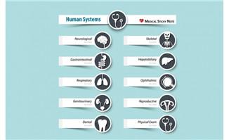 扁平化 人体各个功能器官