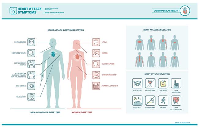 人体结构图片矢量图