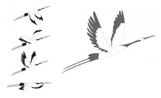 白色飞鸟丹顶鹤飞行的动