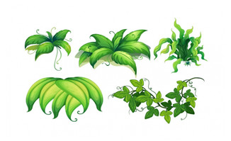 不同植物的叶子插图矢量