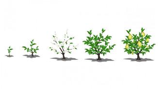 小树成长flash_植物flash - 漫品购_MG动画短片素材_flash源文件_动漫矢量图免费素材网