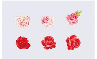 花朵花瓣ai素材设计