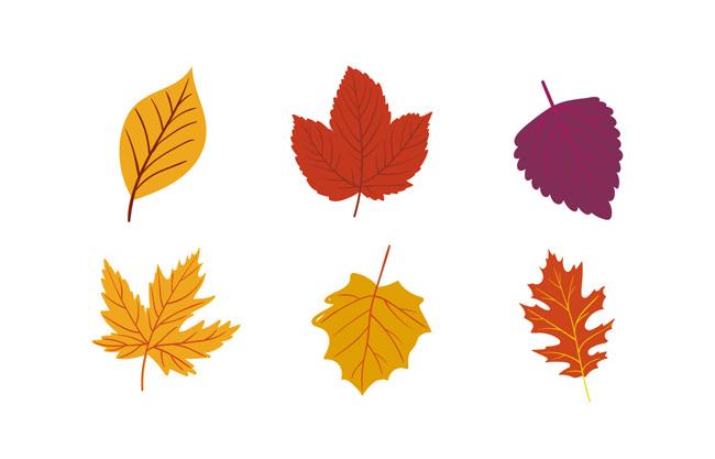 秋天漂亮枫叶矢量叶子素材图片