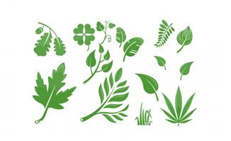 手绘插画绿植树叶AI素材
