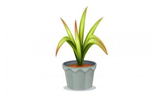 手绘卡通绿植盆栽插图素