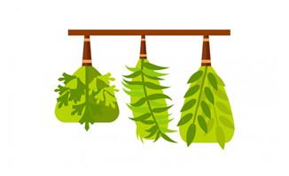 扁平化绿植艺术造型设计素材