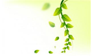 自然清新背景绿叶环保元素海报设计素材