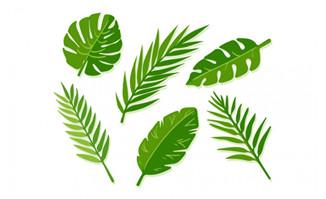 矢量棕榈树叶子植物绿叶叶子形状素材设计