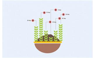 植物生长天数统计图表信息素材设计