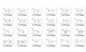狼运动规律分镜头手绘稿参考资料