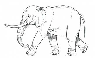 大象的各种动作手绘线条