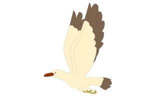 飞翔的海鸥鸟类飞行动作