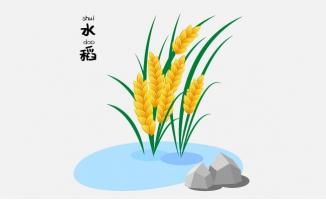 可爱矢量水稻稻子卡通插