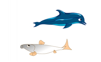 海豚及海鱼张嘴游动的动
