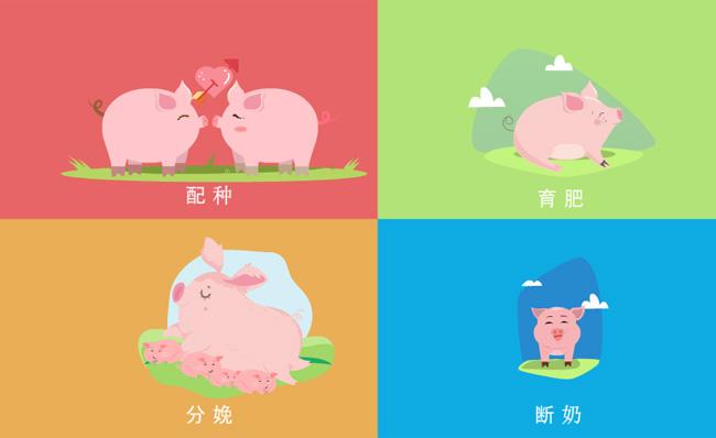 小猪诞生过程配种育肥分娩断奶MG动画宣传片模板