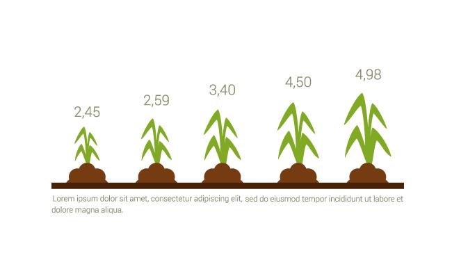 植物生长素材图表信息图片